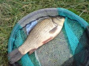 Как ловить плотву в стоячей и проточной воде
