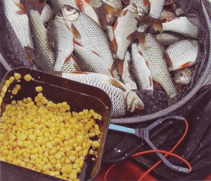 Достоинства и недостатки кукурузы
