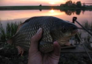 Теплолюбивая рыба